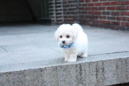 挑选狗狗的注意事项,小型犬和大型犬,哪个好?