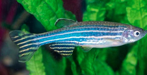 淡水鱼有哪些,耐活好养的有哪些?