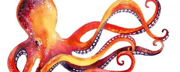 章鱼和鱿鱼的区别是什么,哪个聪明