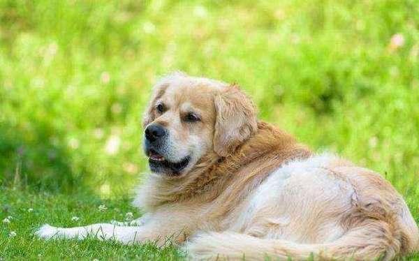 什么狗狗最聪明?智商高的让你惊叹