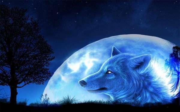 狼与狗的区别,其实还是挺大的