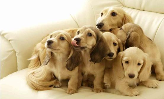 如何养狗狗