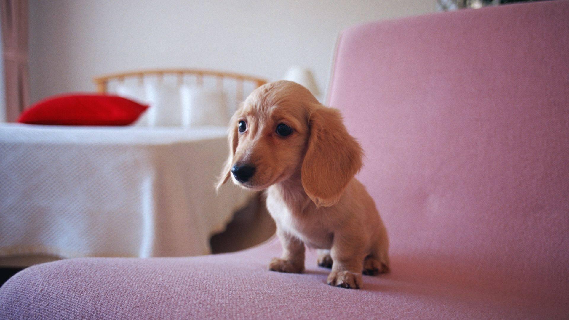 狗身上有跳蚤怎么办