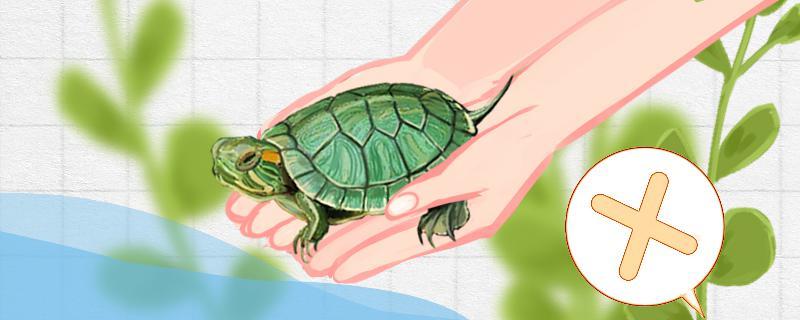 巴西龟怎么养,小巴西龟怎么养