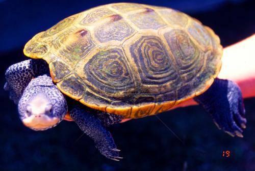 乌龟冬眠吗