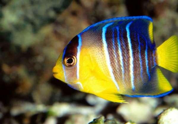 热带鱼的饲养与繁殖指南