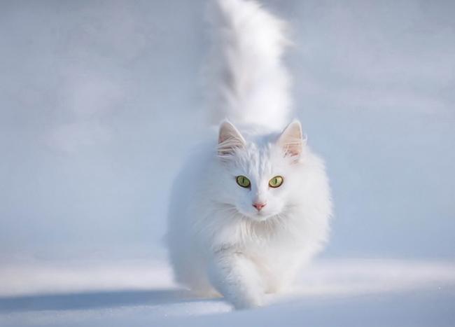 怎么判断一个猫咪的年龄大小?