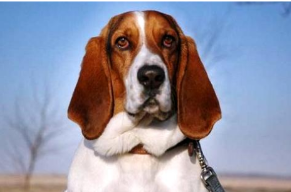 怎么训练狗狗坐下别动?