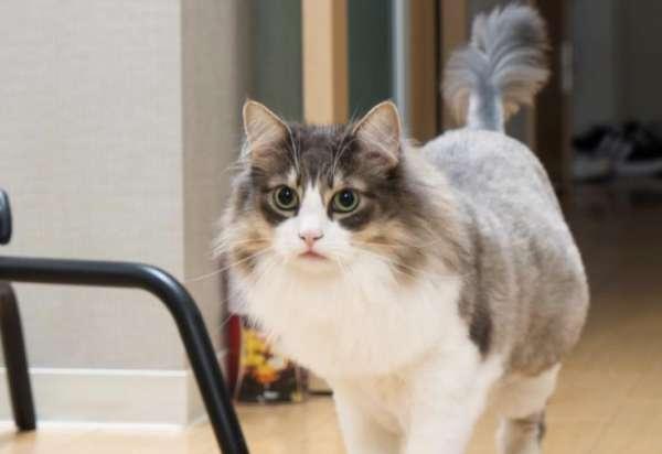 猫咪不爱喝水有哪些妙招可以解决?