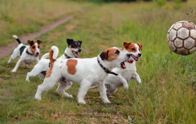 适合与狗狗一起做的运动
