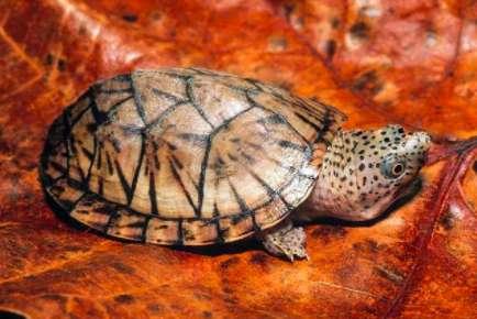 乌龟冬眠醒后喂什么?