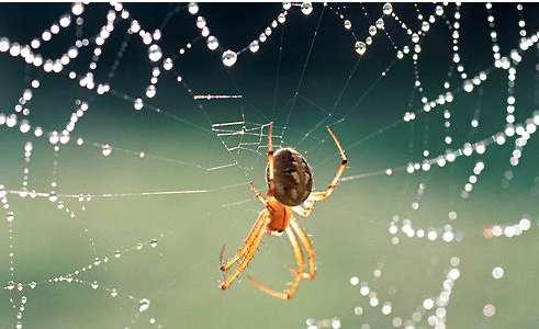 蜘蛛不进食的原因有哪些?