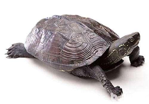除了龟粮乌龟还能吃什么?